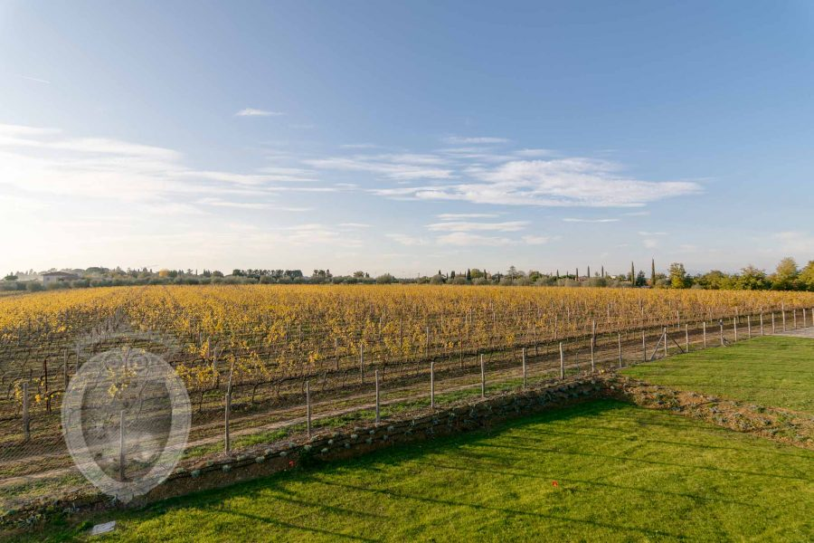 Country house in the vineyards - view